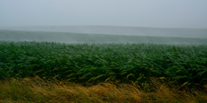 Rain falling on a field near Mr. Vernon. Rich Herrmann/Flickr