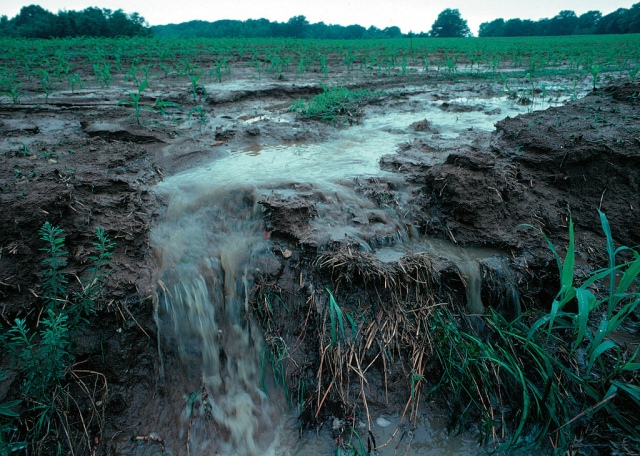 Agricultural runoff in Iowa (Lynn Betts/Flickr)