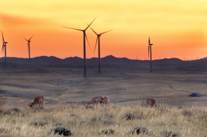 Prong Horn Antelope graze near a wind energy operation outside of Casper, Wyoming. (Duke Energy/Flickr)
