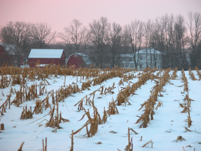 Early snows  (Julie Falk/Flickr)
