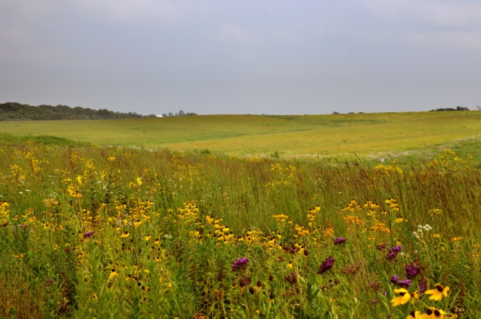 The Neal Smith National Wildlife Refuge near Monroe, Iowa, features over 5,000 acres of native prairie. (Rachel Gardner / Flickr)