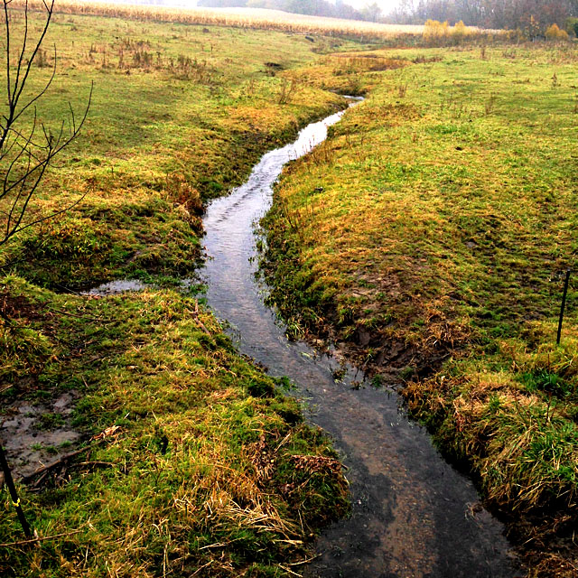 A stream near Elgin, Iowa, part of the Turkey River Watershed (KC McGinnis / CGRER)