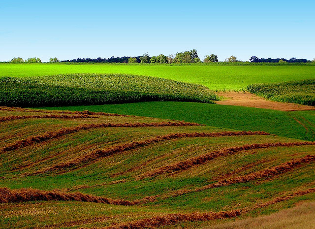 Corn and hay grow on these rolling hills in Clayton County, Iowa (Todd Ehlers/Flickr)