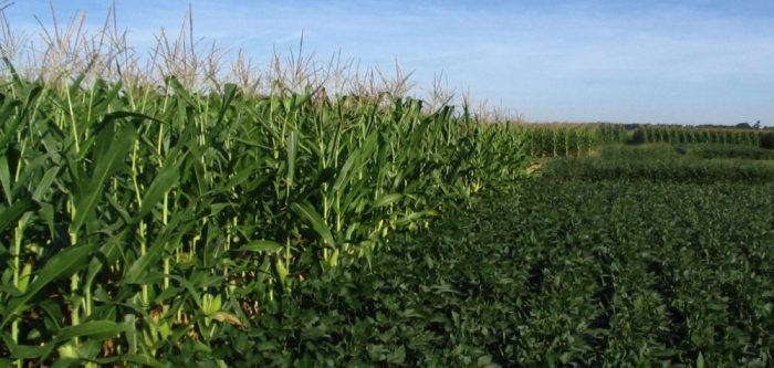 corn-and-soybean-1000x477