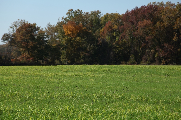 Cover crops and no-till farming on agricultural field 02
