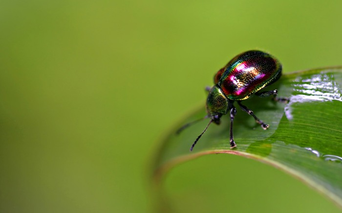 ws_Colorful_bug_1920x1200