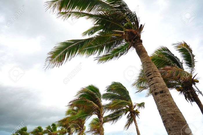 14896004-palms-at-hurricane