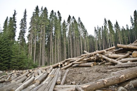 depositphotos_11669632-stock-photo-deforestation