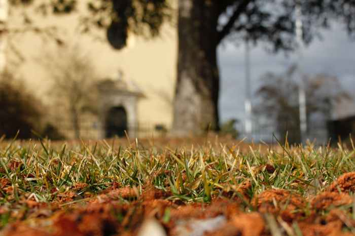 worms eye view of grass